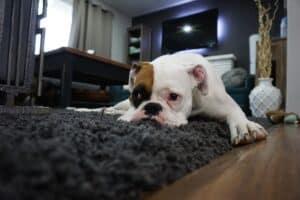Comment choisir son tapis – guide d'achat
