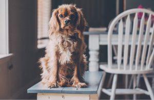 Comment afficher une décoration pet-friendly dans votre maison?