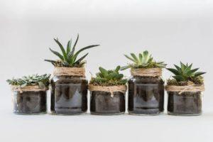 Comment décorer sa maison avec des plantes d'intérieur ?